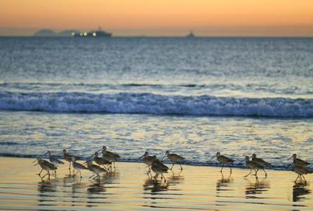 seagull_seashore